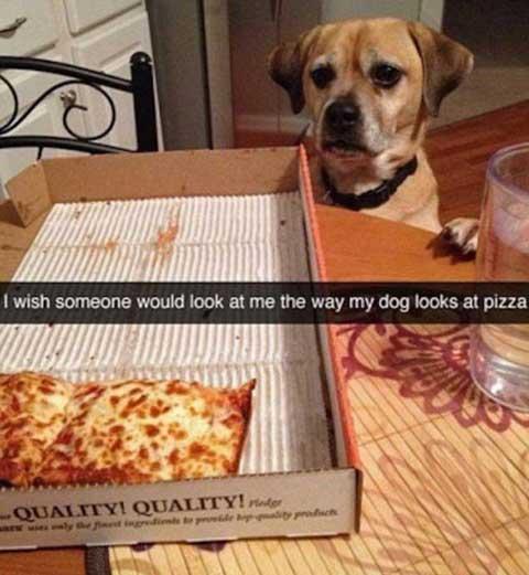 doglookspizza_funny_snapchats