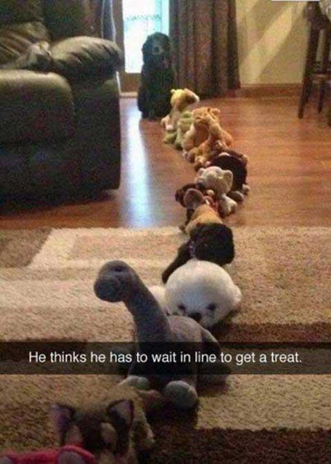 poordog_funny_snapchats