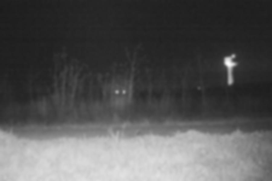 trail camera footage