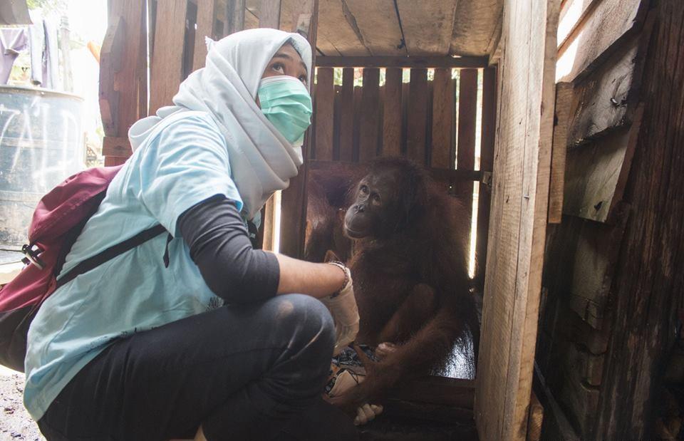 Source: Facebook/International Animal Rescue