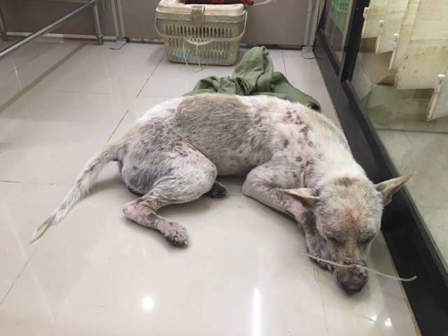 Source: Facebook/Thai Street Paws Rescue